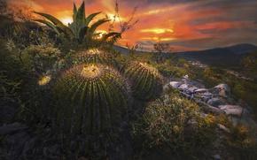 Обои небо, закат, природа, камни, скалы, Мексика, кактусы