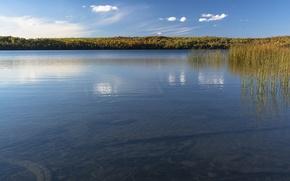 Картинка небо, вода, озеро, пруд, растение