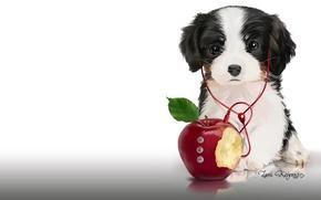 Картинка музыка, яблоко, наушники, арт, плеер, щенок, детская. Lorri Kajenna