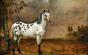 Картинка картина, холст, Паулюс Поттер, масло, «Пятнистый конь», нидерландский художник