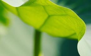 Картинка лист, Зеленый, край