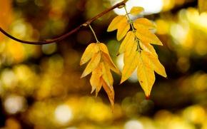 Картинка осень, листья, блики, ветка