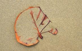 Обои сухой, лист, фон, песок