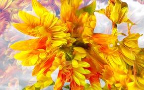 Картинка цветы, природа, лепестки, сад