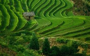 Обои трава, поле, дом