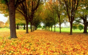 Обои осень, природа, парк, листва