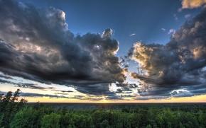 Картинка лес, небо, облака