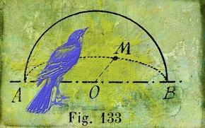 Картинка текстура, фон, птица