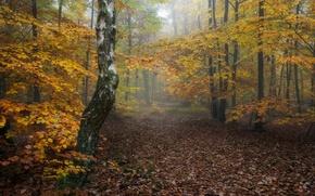Обои лес, природа, осень