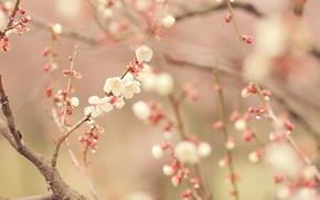 Картинка дерево, весна, цветение
