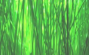 Обои green, grass, macro