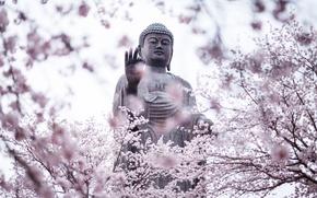 Обои сад, statue, city, город, цветение, сакура, Japan, Amitabha Buddha, Ibaraki Prefecture, Будда Амитабха, Ushiku, деревья, ...