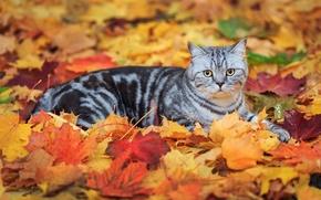 Картинка кот, листья, полосатый