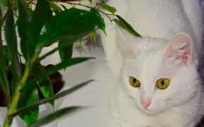 Картинка кошка, цветы, окно