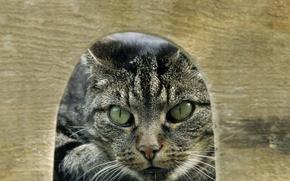 Картинка хищник, нора, Mouse Hunt
