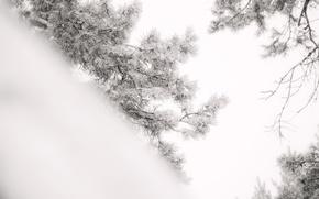 Картинка Зима, ветка, сосна, хвоинки.