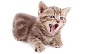 Картинка язык, малыш, котёнок