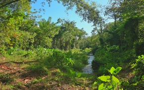 Картинка зелень, трава, деревья, тропики, ручей, магия