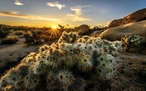 Картинка солнце, лучи, деревья, закат, горы, Калифорния, США, Joshua Trees National Park