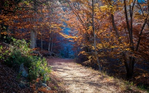 Обои лес, осень, тропа, природа