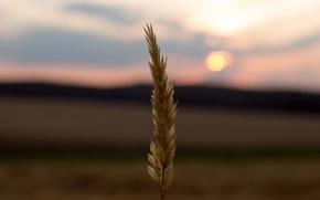Картинка twilight, field, sunset, sun, dusk, corn, countryside, farm, ear, silhouettes, farmland, corn field, corn ear