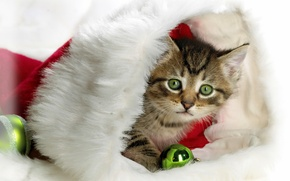Обои котенок, новый год, шапка