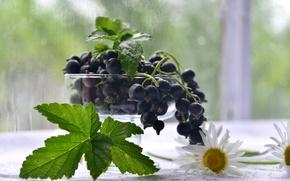 Обои ягоды, ромашки, черная, смородина