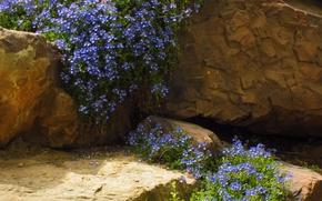 Картинка камни, Скалы, rock, цветочки, синие, blue, flowers, stones