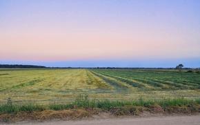 Картинка дорога, поле, небо, трава, пейзаж, закат, природа, путешествия, восход, тепло, дерево, Лето, деревня, урожай, картинка, …