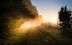 Картинка дорога, туман, утро