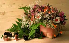 Картинка листья, цветы, корзина, грибы, шишки