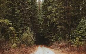 Картинка дорога, лес, чаща