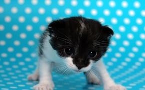 Обои котенок, точки, голубой