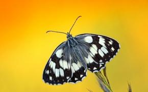 Картинка капли, роса, фон, бабочка, растение