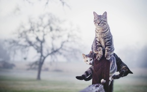 Обои кошки, туман, забор