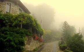 Обои зелень, деревья, цветы, город, туман, утро, деревня, брущатка