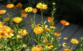 Картинка лето, обои, лепестки, сад, дорожка, клумба