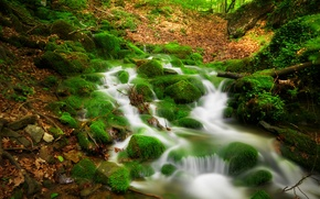 Обои river, forest, деревья, Природа, trees, лес, view, пейзаж, nature, scenery, landscape