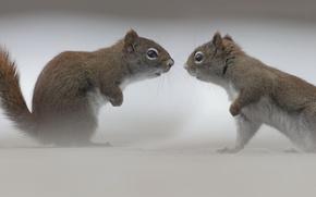 Картинка встреча, противостояние, белки
