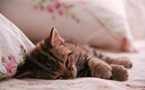 Картинка животные, кот, котенок, сон, kitten, cat, animal, sleep