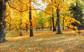 Обои парк, скамья, деревья, листья, осень