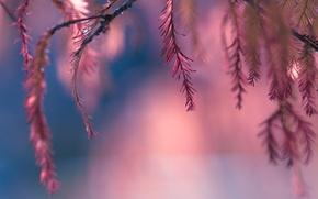 Картинка листья, розовый, боке, веточки