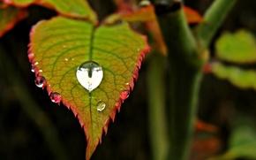 Картинка листья, вода, макро, красный, зеленый, роса, фон, widescreen, обои, капля, размытие, листик, wallpaper, листочек, drop, …