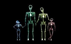 Обои семья, скелет, рентген