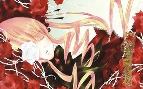 Картинка сон, шипы, rozen maiden, art, красные розы, shinku, капор, peach-pin