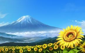 Картинка лето, вулкан, поле подсолнухов