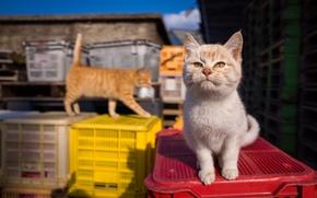Картинка взгляд, котенок, мордочка, милый