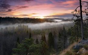 Картинка утро, природа, туман, деревья, Finland, Noux National Park, восход, Финляндия, лес
