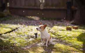 Картинка собака, сад, весна, друг