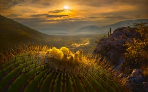 Картинка солнце, макро, кактус, долина, Мексика
